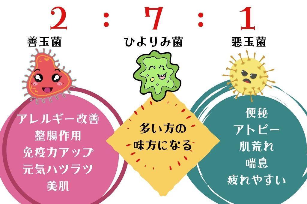 腸内3大細菌の特徴